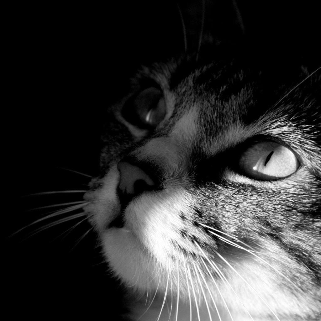 sweet cat ipad mini wallpaper   ipad mini, iphone 4, iphone 5 wallpapers