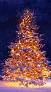 christmas-wallpaper-iphone-5-640x1136-51