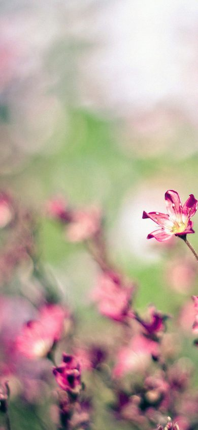 field pink flowers iPhone XR Wallpaper Download